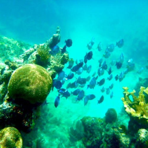 Snorkeling, VI